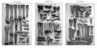 Кістки замку Нялаб 5